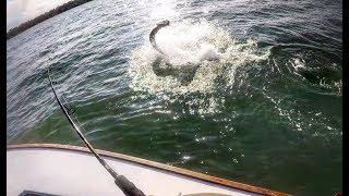 GIANT TARPON Fishing in COSTA RICA!