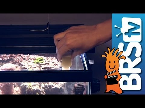 Feeding Corals - EP 4: Fish and Corals