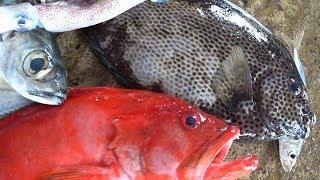 Fish Market Trincomalee Sri Lanka