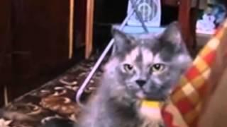 funny boxing cat