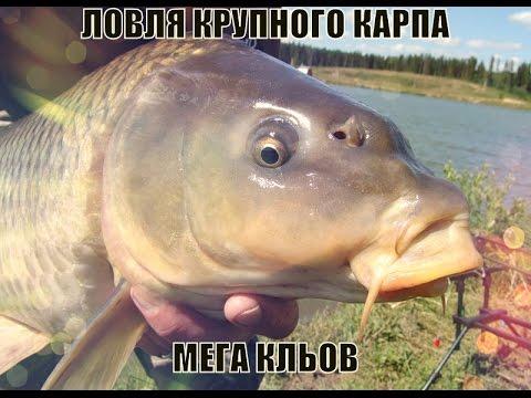 карповая рыбалка ловля большого карпа секреты рыбалки Music Videos