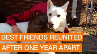 Best Friends Reunited After One Year Apart