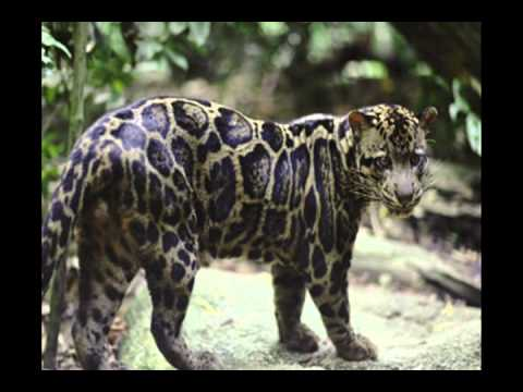 Most Dangerous Big Cats In The World