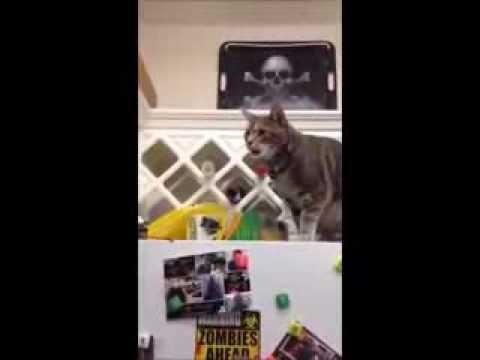 Sansa broke her Cat's Meow
