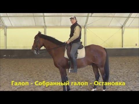 Конный спорт обучение. Галоп - Собр. галоп - Остановка. Кизимов