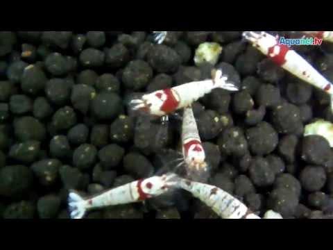350.000 Garnelen In 1.000 Aquarien   Die Fu Shrimp Farm In S  Dchina