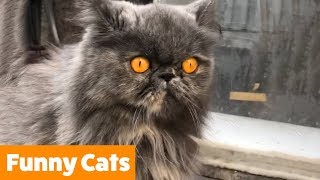Funniest Unusual Cats | Funny Pet Videos