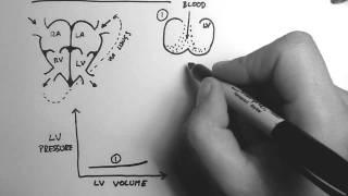 Cardiac Pressure-Volume Loop