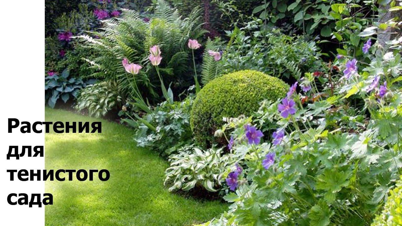 Какие растения лучше сажать в тени 50