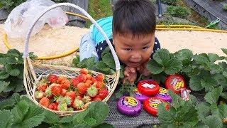 Đồ Chơi Trẻ Em Bé Pin Vườn Dâu Tây Hubaa Bubba❤ PinPin TV ❤ Baby Toys Graden Strawberry