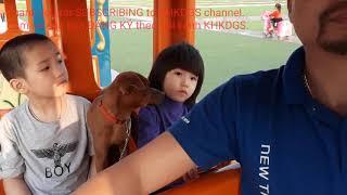 Baby Song In English Tom Tyt|video cho be|clip cho be|funny kids|kids songs|nhạc tiếng anh cho bé