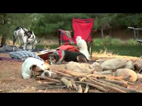 Dogs Driving Cars and Camping Video - Funny Subaru commercial