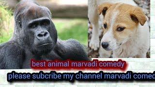 Best animal marvadi comedy  by chirag kumar