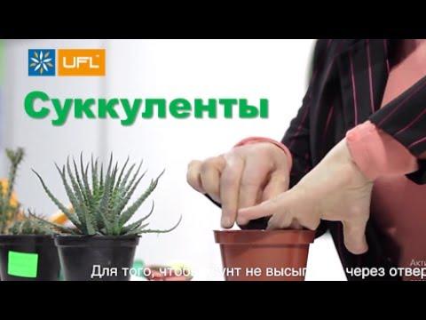 🌱 Как пересаживать кактус🌱 Ботанический сад им. Гришка, Киев. Как пересадить суккулент U-F-L.net