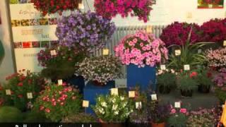 balkonsko cvetje-pregled