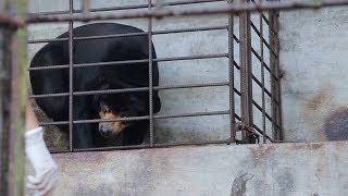 Tin tức 24h mới nhất | Giải cứu gấu chó bị nuôi nhốt 16 năm