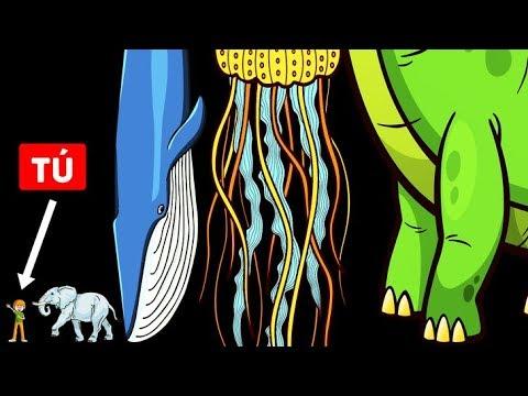 Las Formas De Vida Más Altas En La Historia De La Tierra