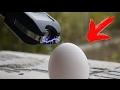EXPERIMENT - Elektroschoker VS Ei, Essiggurke, Tomate