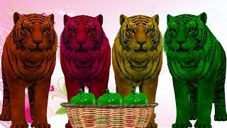 Wild Animal Tiger Finger Family Songs | Learn Colors With Animals Nursery Rhymes for Kids