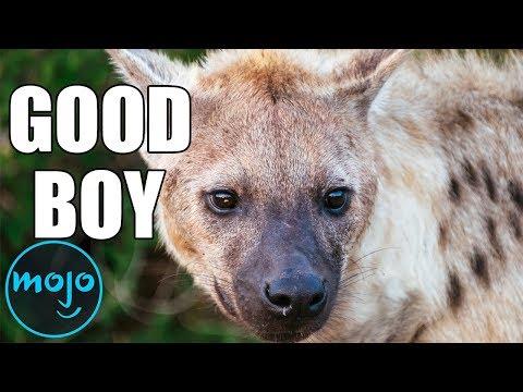 Top 10 Misunderstood Animals