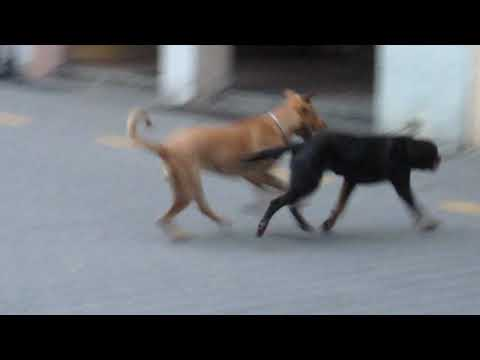 Dogs Playing in the Streets of Stuttgart