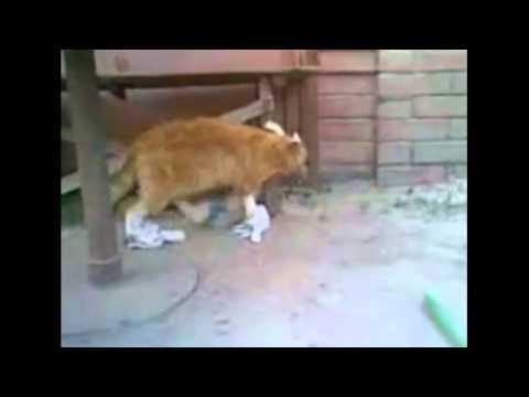 Смешно одетый кот