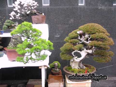2014 Bonsai market at the Green Club Part 1, Ueno Park. Kokufu Bonsai Ten, By Centro Bonsai Tenerife