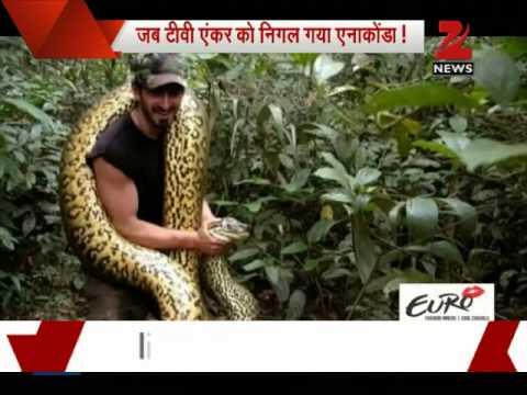 giant anaconda eats man alive - photo #12