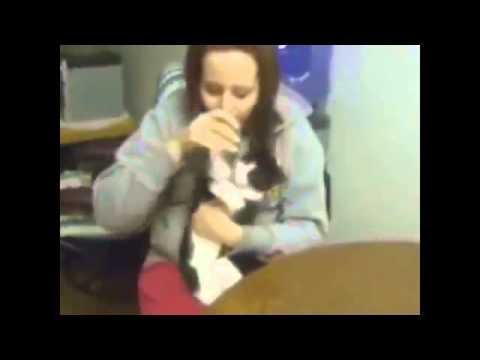 Кошки в воде, прикол! Funny! youtube original