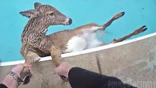 Lexington Police Officer Helps Save Deer Stuck in Swimming Pool