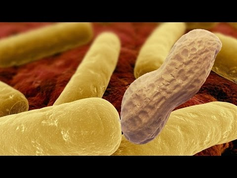 Do Antibiotics Cause Food Allergies + Bacteria Cure Them?