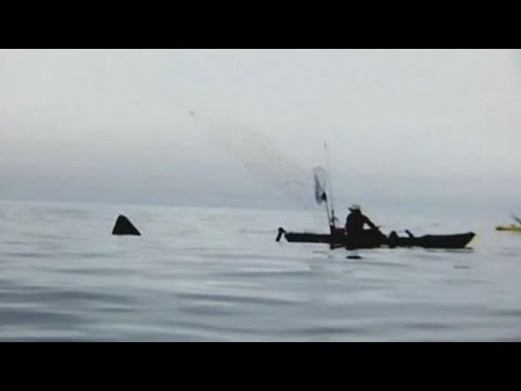 Surprise Shark While Fishing!