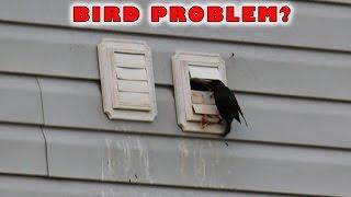 (3.47 MB) Dryer Vent Bird Guard | Dryer Vent Bird Stop Mp3