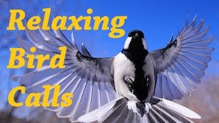 Relaxing Music Bird Sounds And Feel The Wind Blowing II Meditation Relaxing Music 1 Hour