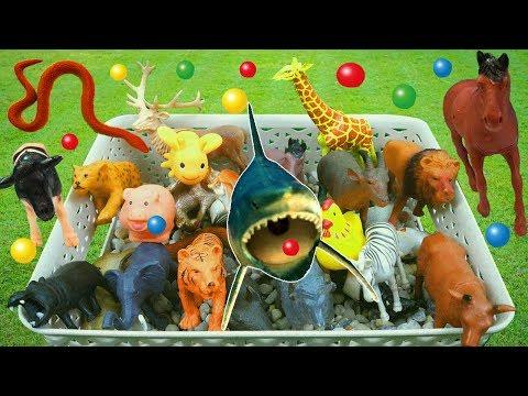 Tiere lernen für kleinkinder spielzeug für kinder deutsch - Bildungs video kinder