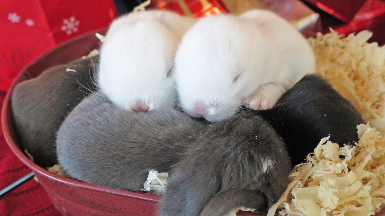 Baby bunnies and rabbits