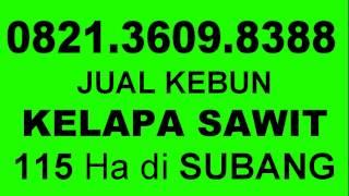 0821 3609 8388 Jual Kebun Kelapa Sawit Murah Di Subang