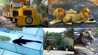 Borivali national park  Gandhi Tekdi nd Toy Train   Sanjay Gandhi National Park (Borivali East)
