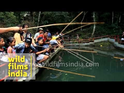 Anthurium festival celebrations - the best of Mizoram, India