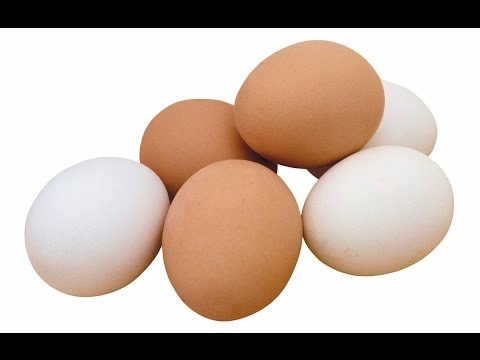 Пища Богов  - Куриное яйцо, Брюква - Секреты кулинарии