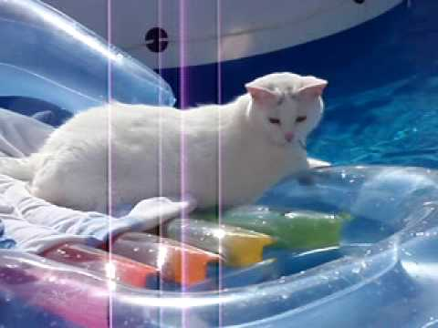 Cat pool fail youtube Where can i buy a swimming pool near me