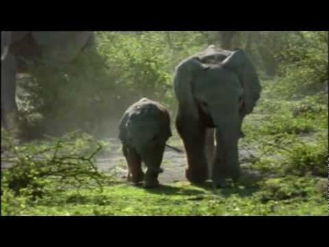 Patience Dabany & Tabu Ley Rochereau - Sango Ya Mawa