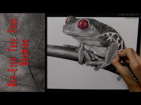 Red-Eyed Tree Frog - Drawing