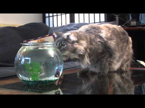 Flying fish attacks cat!