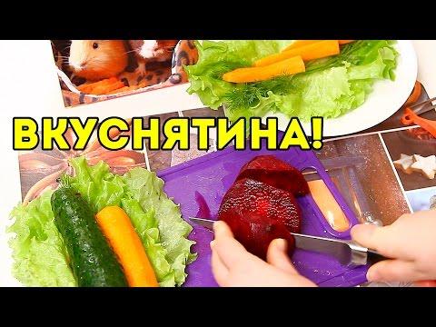 DIY: Лакомство Для Морских Свинок / SvinkiShow