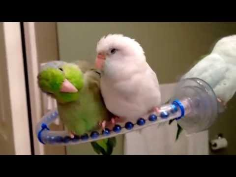 Bathroom Chat with Birds