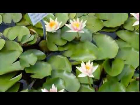 Blumen und pflanzen im botanischer garten münchen nymphenburg teil 1