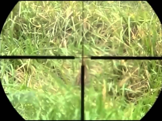 Cacería de perdices en cámara lenta - Slow motion partridges hunting
