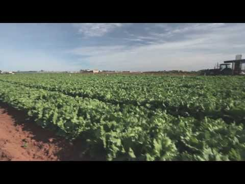 Recently Bayer has been collaborating with IPM Technologies to bring integrated pest management to more Australian horticulture growers. In this video we talk with Anthony and Jason Agosta...