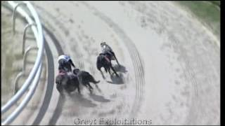 Greyhounds hurt at Hall Green dog track